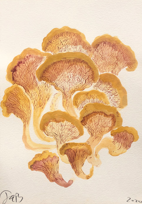 Fungi Chanterelle | Julianna Byrne | Original Artwork