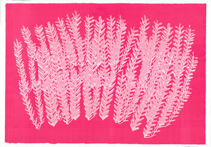 Pink Panama | Rose Electra Harris | Screenprint | Partnership Editions