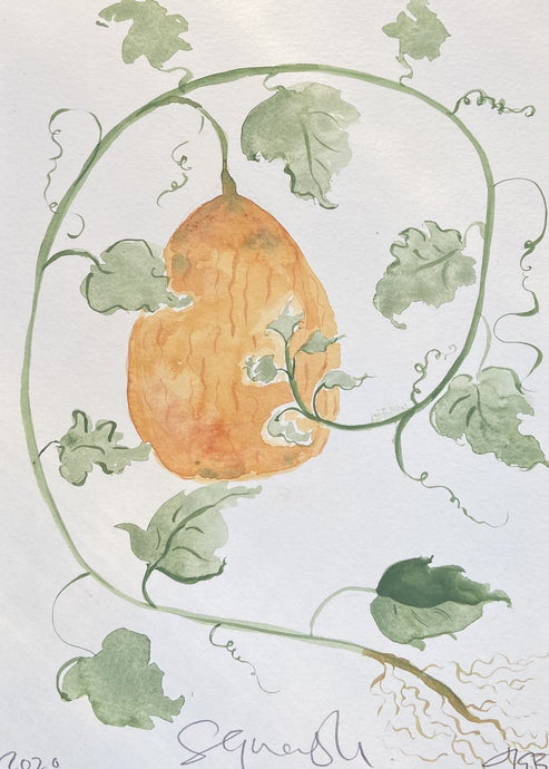 Squash on vine | Julianna Byrne | Original Artwork | Partnership Editions