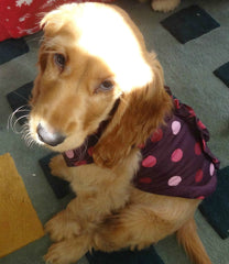Dog Quilted Coat Burgundy with Pink Polka Dots