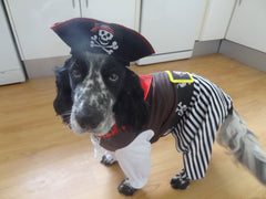 Fancy Dress Dog Costume/Coat Pirate Pieces of Eight