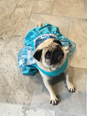 Dog Costume/Dress Disney Character Elsa Frozen