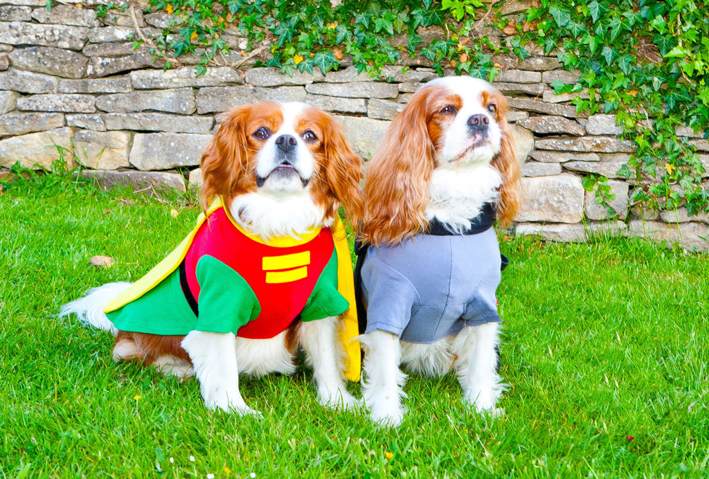 ... Fancy Dress Dog Costume/Coat Robin (Batman) & Fancy Dress Dog Costume/Coat Robin (Batman) | Waggy Wardrobe