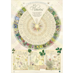 Bach Flower Poster Wall Chart for the 38 Essences
