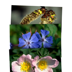 Healing Herbs Postcards set of 40