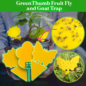 GreenThumb Fruit Fly and Gnat Trap