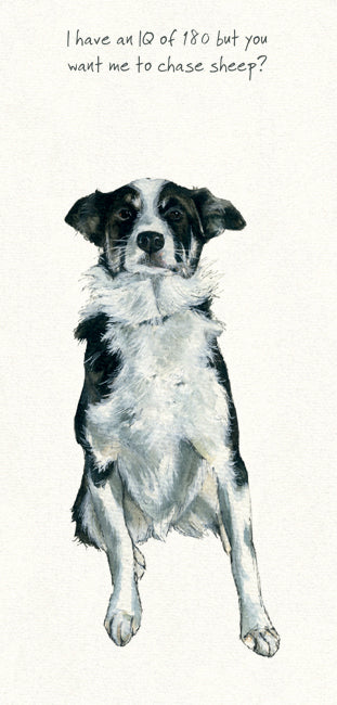 Border Collie Greeting Card - IQ