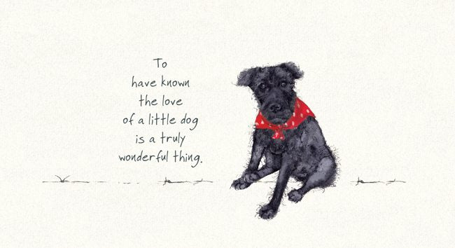 "Patterdale Terrier Greeting Card - ""to have known the love of a little dog"""