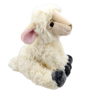 Soft Cute Lamb