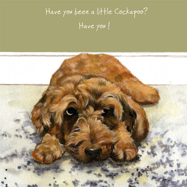 Have you been a little Cockapoo? Have you!