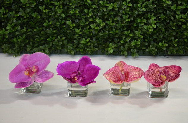 Mini Orchid Bloom - Bali, Purple Fiji, Hawaiian, Midnight Hawaiian - The Kemble Shop