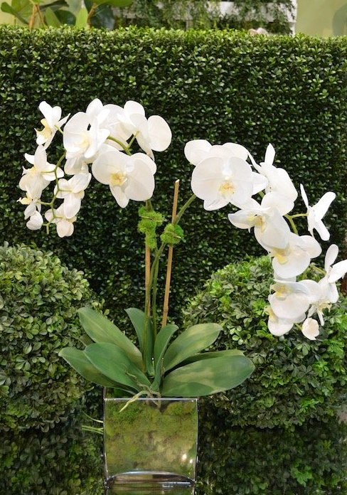 Large Orchid x2 w/Moss - The Kemble Shop