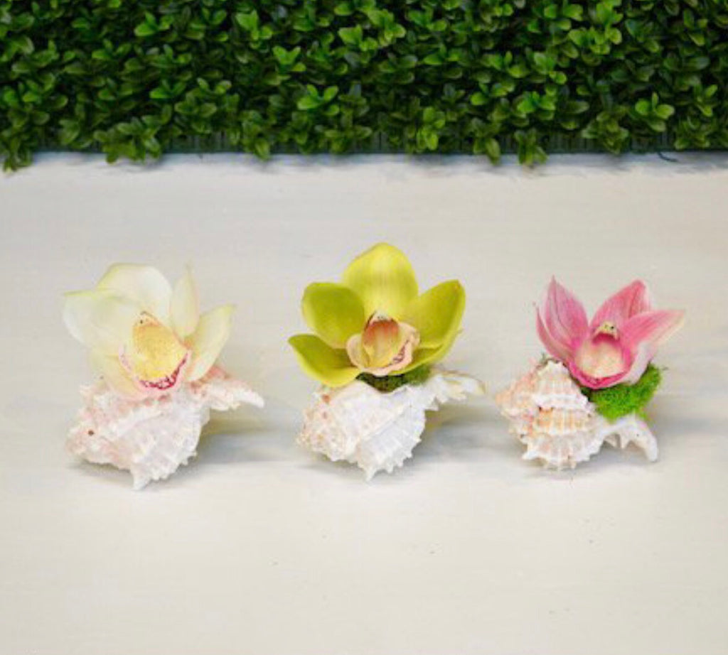 Mini Orchid Bloom in Murex Shell - The Kemble Shop