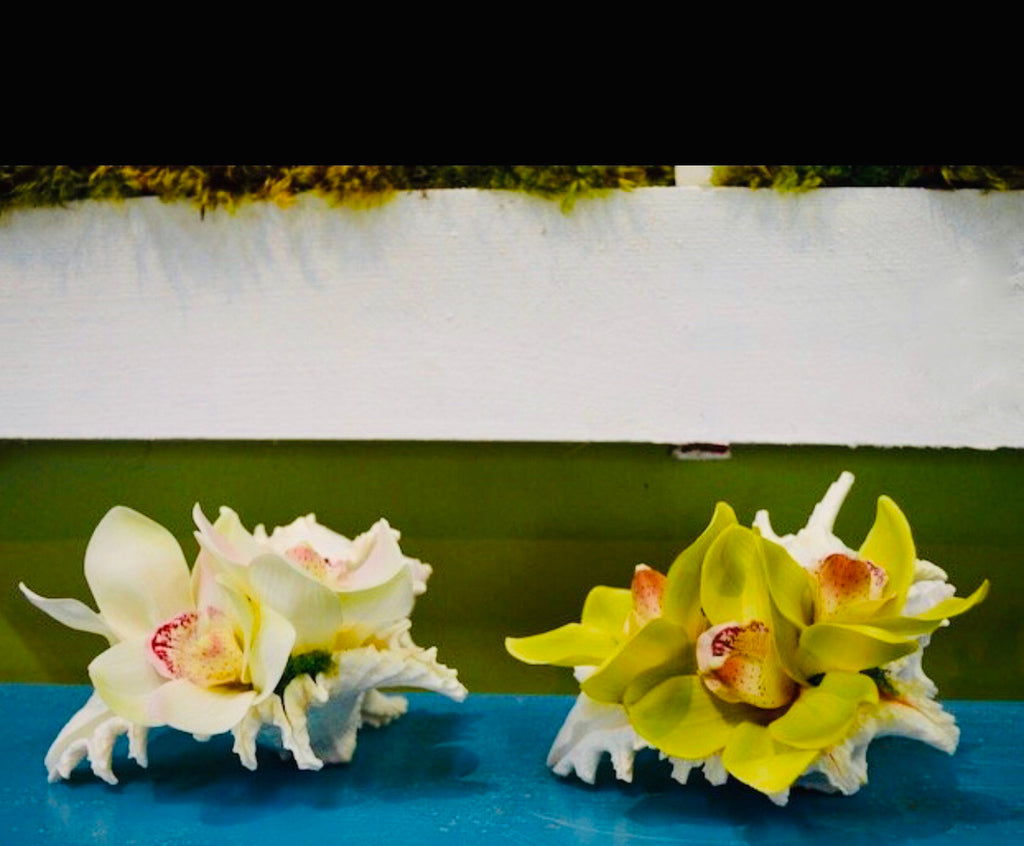 Triple Orchid Bloom in Large Conch - White, Green or Pink - The Kemble Shop