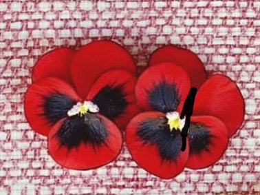 Red Small Pansy Earrings - The Kemble Shop