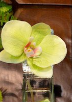 Mini Orchid Bloom - White, Green, Light Pink, or Fuschia - The Kemble Shop
