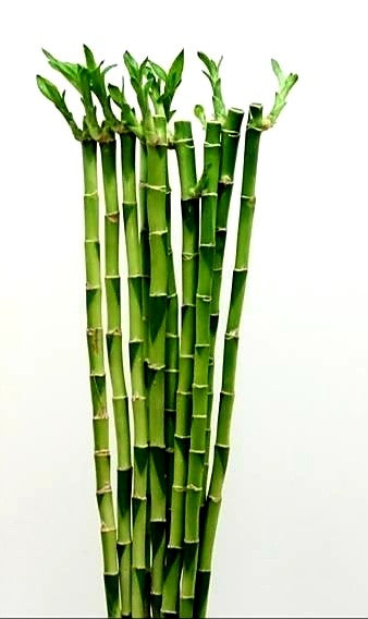 Straight bamboo with leaves