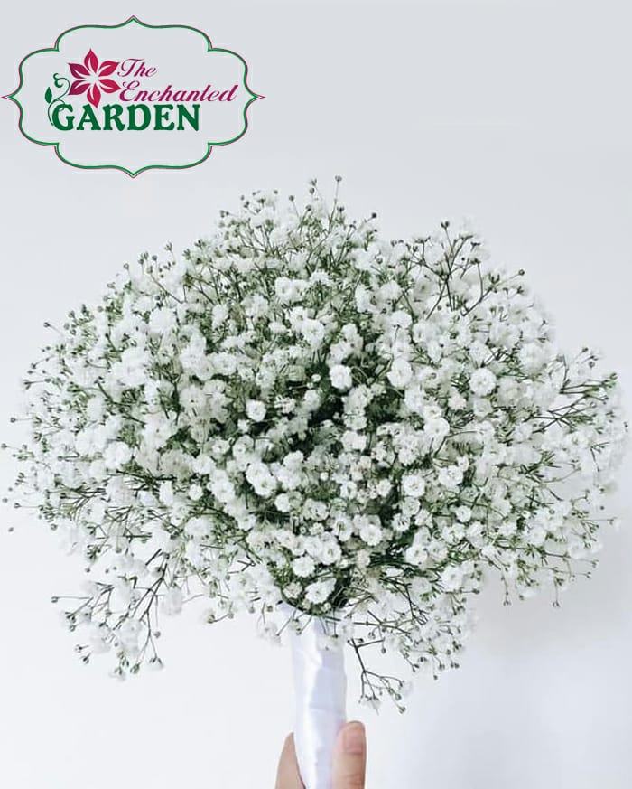 Bridal Gypsophila Bouquet