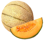 Reticulated Italian Melon