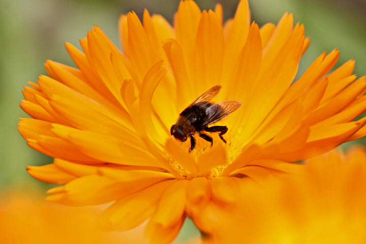 HOW BEES CONTRIBUTE TO THE PLANET