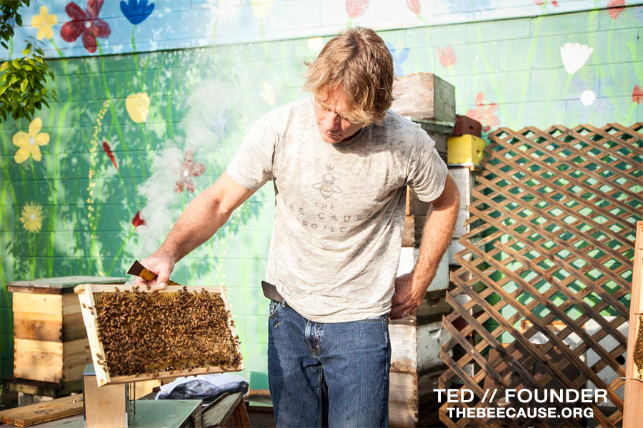 Ted // The Bee Cause Founder