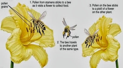 the benefits of bees