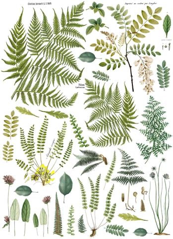 Frond Botanical Transfer - 24x33""