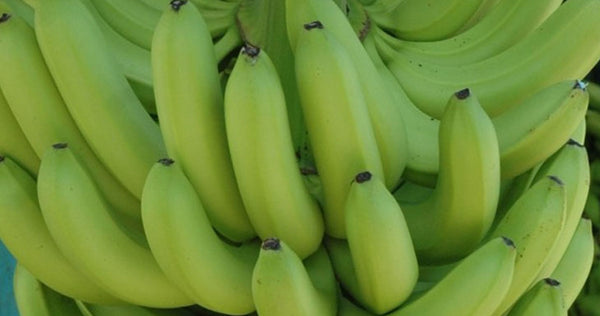 Banane verte bio 500g Background