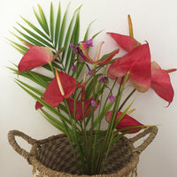 Bouquet d'anthurium bio