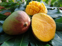 Mangue Julie 500g