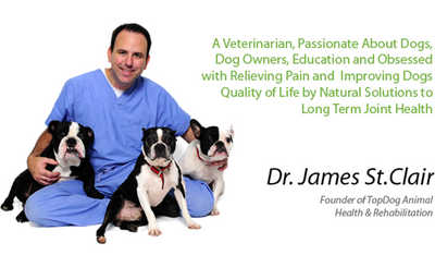Vector-Borne Disease: Education, Risks, & New Protective Products for your Pet