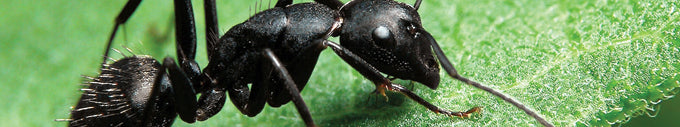 Insect Shield bug repellent clothing deters ants.