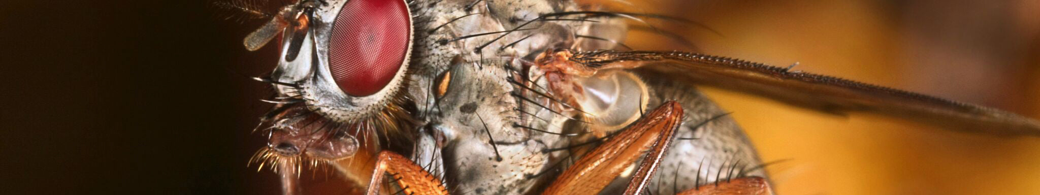 Insect Shield helps prevent diseases transmitted by flies.