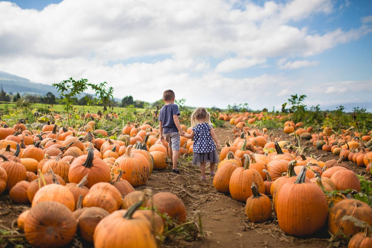Pumpkin patches are an annual fall favorite that's not just for kids!