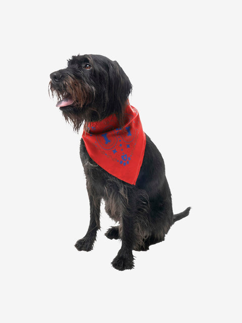 Insect Shield for Pets Paisley Bandana, Poppy
