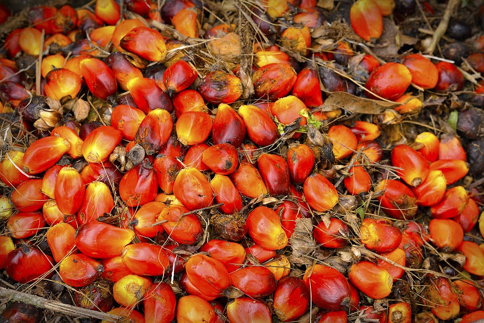 The Case for Sustainable Palm Oil