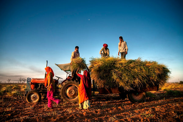 TTL Spotlight: What do the farmers protests in India have to do with Global Fashion?