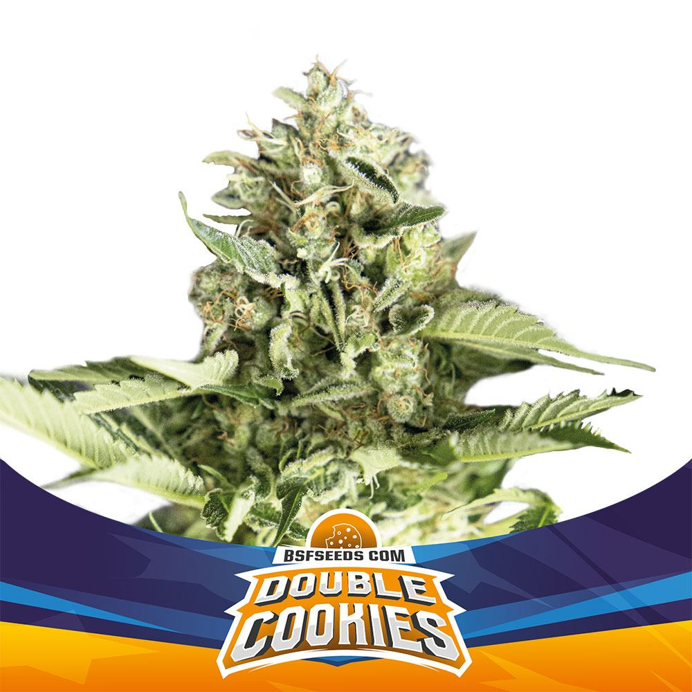 Auto Double Cookies X7 - BSF SEEDS | Z1