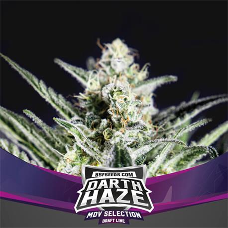 Darth Haze X7 - BSF Seeds | Z1