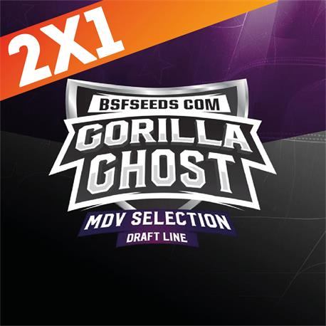 Gorilla Ghost X12 - BSF Seeds | Z1