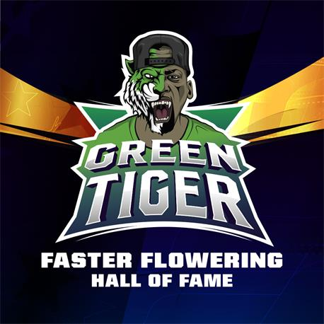 Green Tiger X12 - BSF SEEDS | Z1