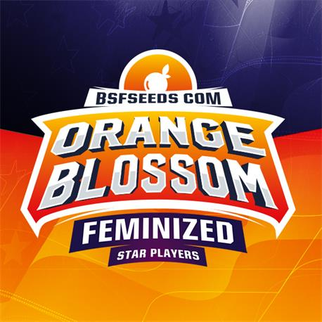 Orange Blossom X12 - BSF Seeds | Z1