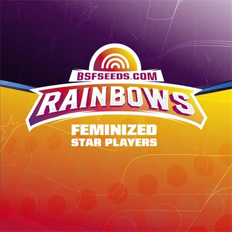 STAR PLAYER Rainbows X12 - BSF SEEDS | Z1