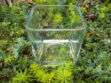 Square Glass Container for Terrariums, Mini Gardens, Succulents or Candles