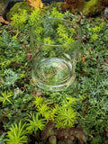 Round Glass Container for Terrariums, Mini Gardens, Succulents or Candles