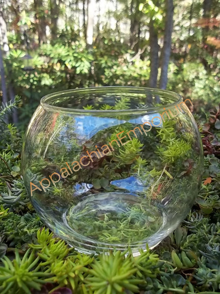 Round Glass Bowl Container Vase for Terrariums, Mini Gardens, Succulents or Candles