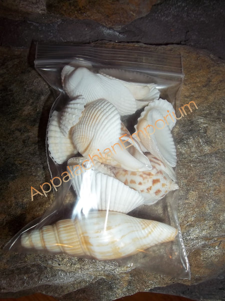 Small Bag of Sea Shells for Succulents, Fairy Gardens, Terrarium Decor
