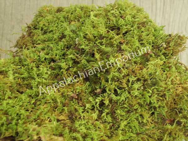 Live Moss Scraps for Transplant or Use Between Patio Stones Feather Sheet 1 Gallon Bag