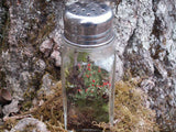 Ready-Made Mini Terrarium Shaker with Live Moss & British Soldier Lichen Great Gift!