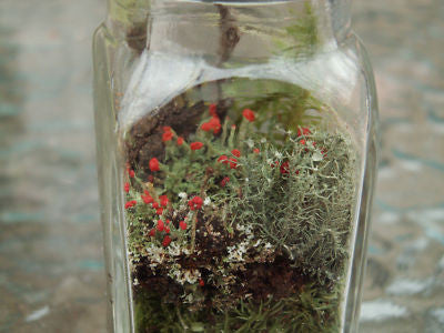 mini terrarium kit shaker